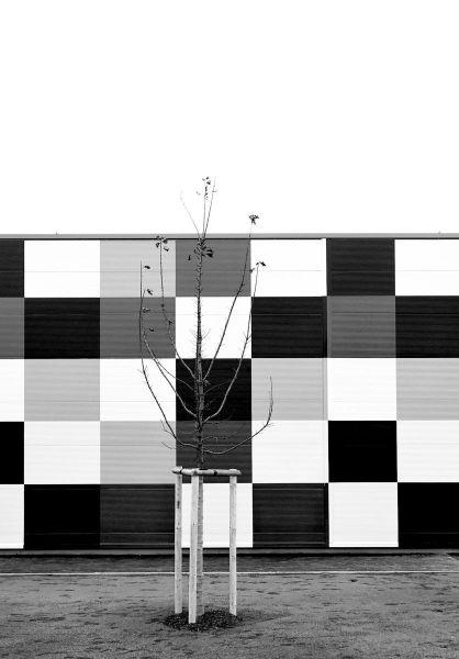 Baum vor Quadraten-Neusiedl am See  -photographic diary